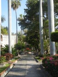 royal palms, Vista Hermosa