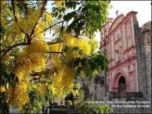 "A Rain of Gold tree graces the grounds of the cathedral in Cuernavaca, ""the city of eternal spring."""