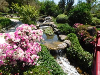 Japanese-style garden at JDM