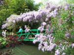 The lily ponds are more famous but i was most impressed by the wisteria.