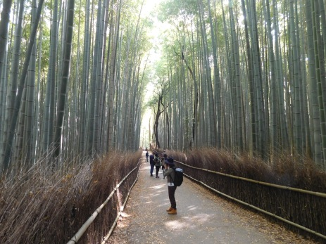 The bamboo grove entrance to the Arashiami garden.
