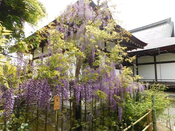 Kyoto Arashiyama 012