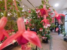 Kyoto botanical garden 005