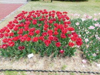 Kyoto botanical garden 018