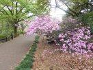 Tokyo Garden 009