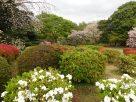 Tokyo Garden 011