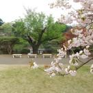 Tokyo Garden 014