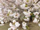 Tokyo Garden 015
