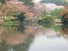 Tokyo Garden 018