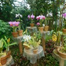 Tokyo Garden 030