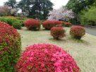 Tokyo Garden 035