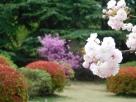 Tokyo Garden 037