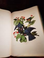 An original copy of John James Audubon's Birds of America.