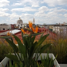 The roof-top terrace features lovely flowers and herbs.
