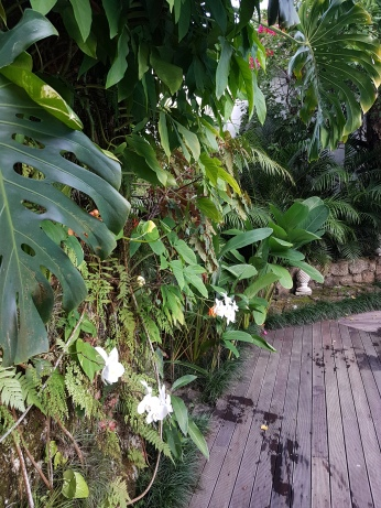 White orchids emerge from the other tropical plants.