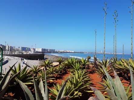 Casablanca's Atlantic shore is quite picturesque with many seafood restaurants in the port.