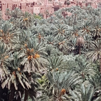 Date palms add a bit of greenery to the mostly arid countryside.