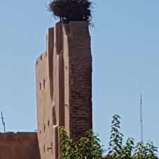 A huge stork nest crowned this building/