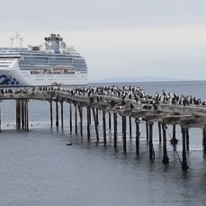 Penguins crowd a wharf; a Princess cruise ship in the harbor.
