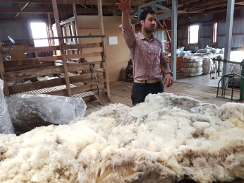 Five kilograms of wool when washed will yield 650 grams.